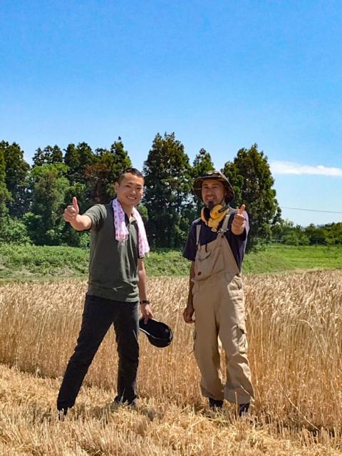 庄内小麦刈り取りです!【庄内産小麦 article no.2】